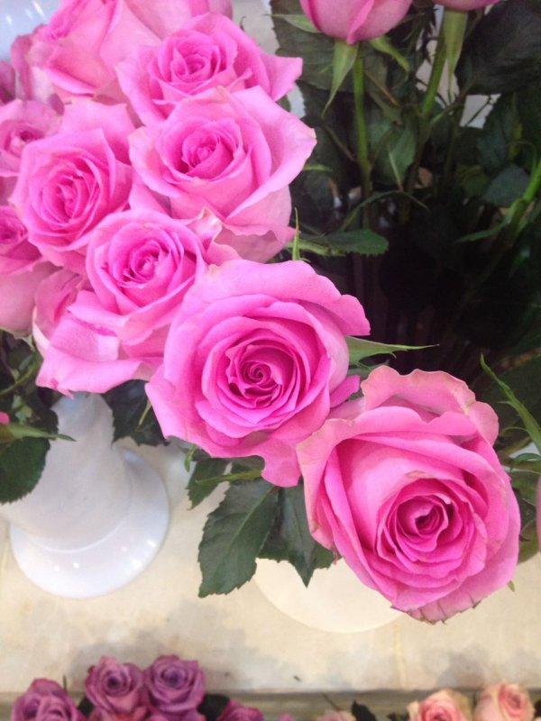 Buy Pink Rose