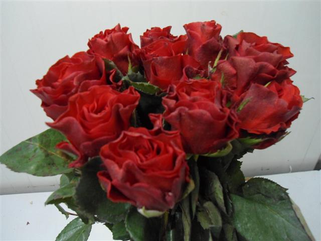 Buy Rose Samurai