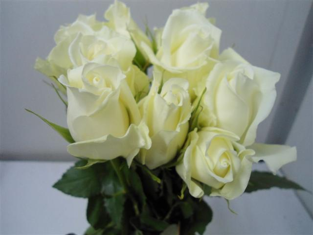 Buy White Rose Hig & Pure