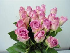 Flowers Aqua